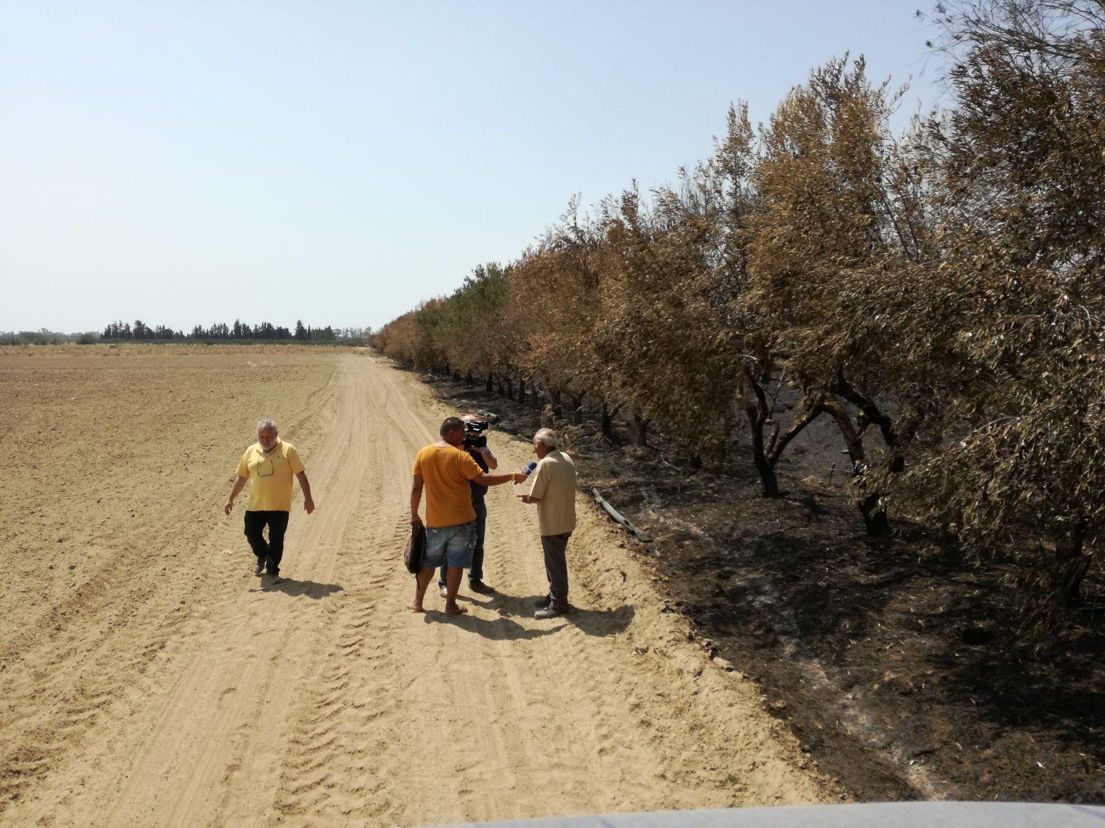 Dal sud asfisiato dal caldo e dagli incendi, No al G7 sull'agricoltura