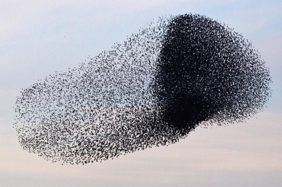 9_Uccelli di città