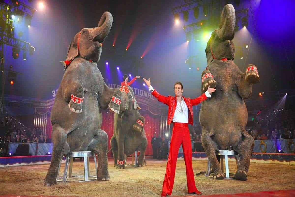 la Campania mette al bando il circo con gli animali